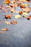 Fall leaf on the ground after the rain Royalty Free Stock Photo