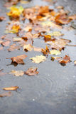 Fall leaf on the ground after the rain Stock Image