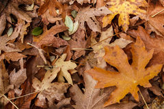Fall leaf litter Stock Photos
