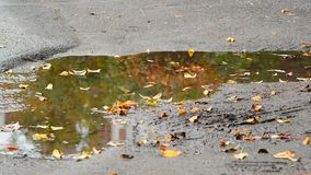 Fall leaf lying in puddle with reflection of tree. Fall leaf lying in a puddle with reflection of a tree stock video footage