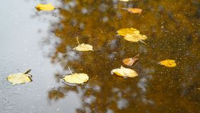 Fall leaf lying in puddle with reflection of tree. Fall leaf lying in a puddle with reflection of a tree stock footage
