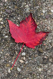 Fall leaf lying on the road Royalty Free Stock Photos