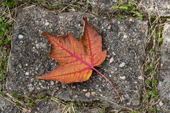 Fall leaf lying on the road Stock Photography