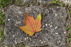 Fall leaf lying on the road Stock Image