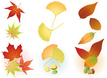 Fall Leaf: Maple,Ginkgo,Acorn. Maple, ginkgo, red leaf and a few nuts Royalty Free Stock Image