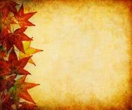 Fall Leaf Margin stock images