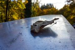 Fall leaf on metal. Small crispy leaf sits on a metal bridge Royalty Free Stock Photo
