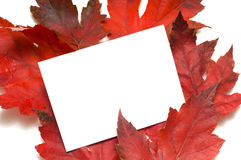 Fall Leaf Note-Card Stock Photos