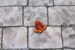 Fall leaf on paving stone walk Stock Photography
