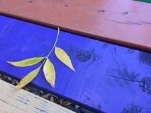 Fall leaf on a picnic table Royalty Free Stock Image