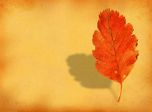 Fall leaf with retro copy space Royalty Free Stock Photos