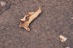 Fall leaf in sand royalty free stock photography