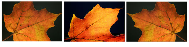 Fall Leaf Series. Triplet series of autumn leaves Stock Photo