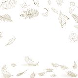 Fall leaf skeletons autumn design template. Stock Photos