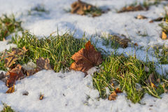 Fall leaf on snow Royalty Free Stock Images