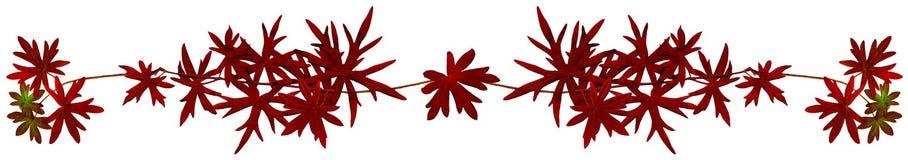 Fall_leaf_strip2 Royalty-vrije Stock Foto