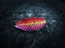 Fall Leaf Wallpaper. Colourful fall leaf wallpaper and abstract background stock photos