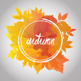 Fall leafes autumn background fall color Stock Image