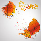 Fall leafes with color splash warm color Stock Photos
