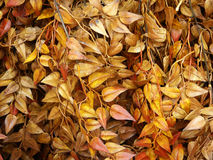 Fall leafs Stock Image