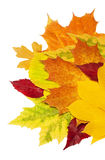 Fall leafs Royalty Free Stock Photo