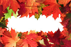 Fall leafs Royalty Free Stock Photos