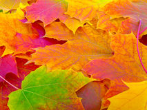 Fall leafs. Background, texture pattern Royalty Free Stock Image