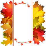 Fall leafs abstract background Stock Photography