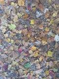 Fall leafs Stock Photo