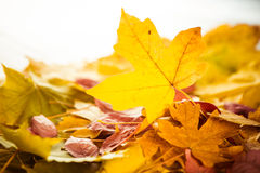 Fall leafs closeup Stock Images