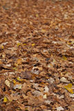 Fall leave background with depth Royalty Free Stock Photo