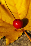Fall Leave with Berry. Beatiful yellow fall leave with a single red berry royalty free stock photos