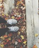 Fall leaves 🍁 Stock Photo