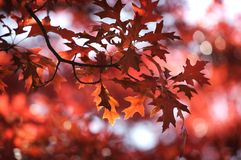 Fall leaves. Colorful leaves on a tree Stock Photography