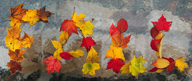 Fall Leaves Stock Image