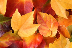Fall leaves. Warm colors of autumn leaves Royalty Free Stock Images