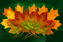 Fall Leaves. Group of colorful green, yellow and orange fall leaves on green background Royalty Free Stock Photography