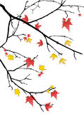 Fall leaves. Tree silhouette with fall orange and yellow leaves on white background royalty free illustration