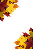 Fall leaves. Border of colourful maple leaves in left top and right bottom corners - isolated Stock Photo