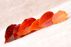 Fall leaves. Leaves lay onto the  background Royalty Free Stock Images