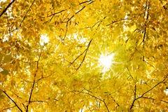 Fall leaves. Orange leaves, bright sunshine, season fall stock photo