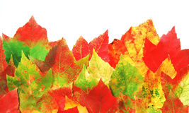 Fall leaves. Autumnal border of colorful maple leaves isolated on white Royalty Free Stock Photos