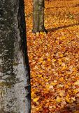 Fall Leaves. Bright fall leaves in a park Royalty Free Stock Image
