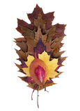 Fall Leaves. Colorful fall leaves isolated on white royalty free stock photography