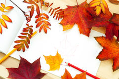 Fall leaves. Autumn leaves of maple lying on white Royalty Free Stock Photos