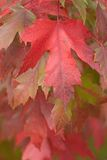Fall Leaves. Photo of a variety of fall leaves royalty free stock photography