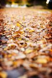 Fall leaves. A sidewalk covered in fallen leaves Stock Image