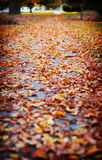 Fall leaves. A sidewalk is covered with fall leaves Stock Photos