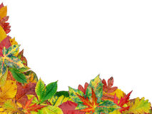 Free Fall Leaves Royalty Free Stock Photos - 3233738