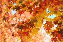 Free Fall Leaves Stock Images - 3470824